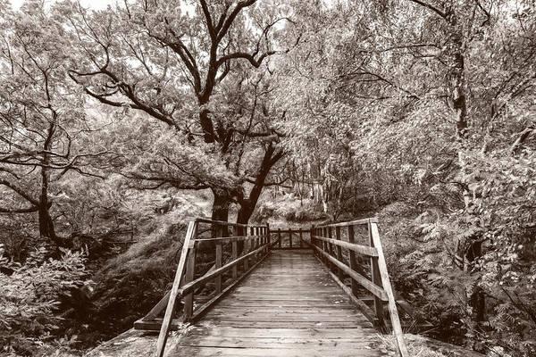 Photograph - The Bridge To Ben Nevis In Soft Sepia by Debra and Dave Vanderlaan