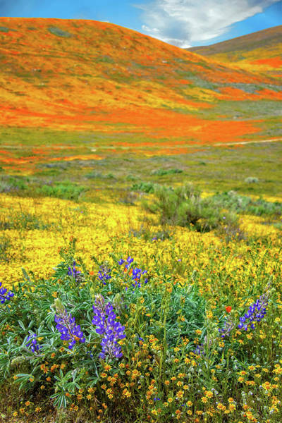 Photograph - The Bright Side - Superbloom 2019 by Lynn Bauer