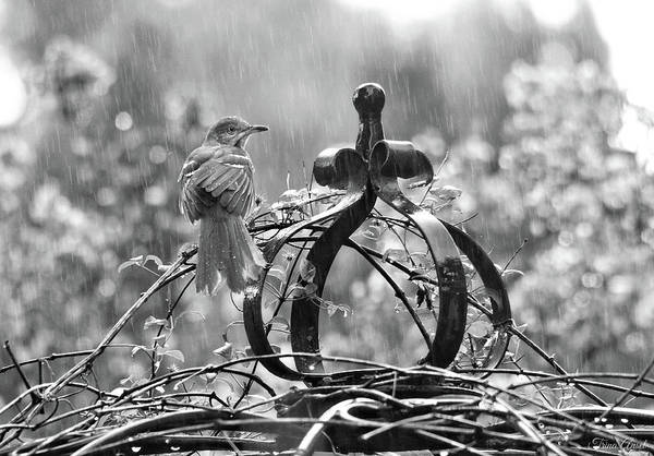 Photograph - The Brown Thrasher In Black And White by Trina Ansel