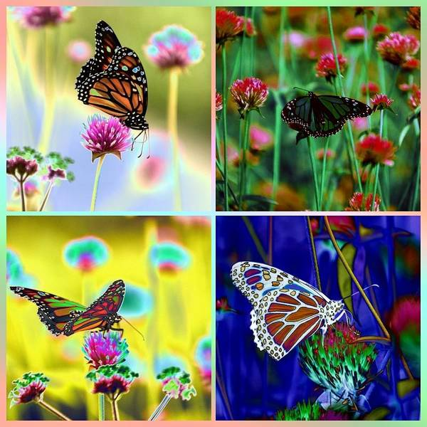 Photograph - The Butterfly Collection 1. by Tom Kelly