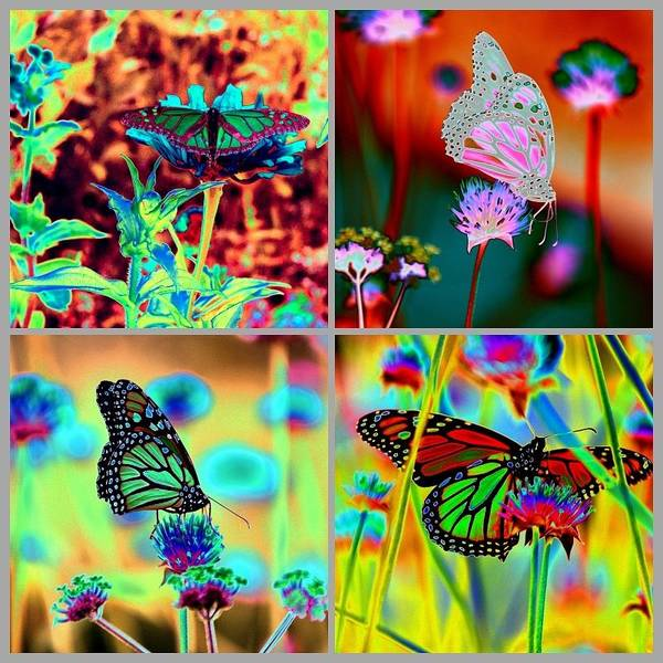 Photograph - The Butterfly Collection 2 by Tom Kelly