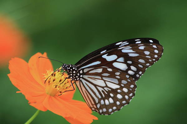 Kerala Photograph - The Butterfly On Green Background by Photo By Agni