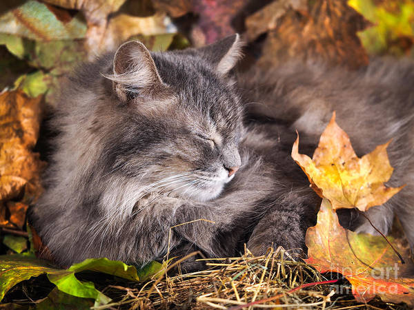 Wall Art - Photograph - The Cat Sleeps In Colorful Autumn by Irina Kozorog