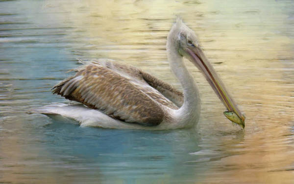 Pelican Mixed Media - The Catch by Lisa S Baker