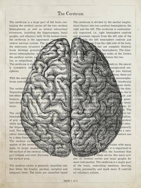 Wall Art - Digital Art - The Cerebrum Anatomy Illustration by Aged Pixel