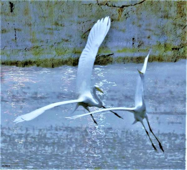 Wall Art - Photograph - The Chase by John R Williams