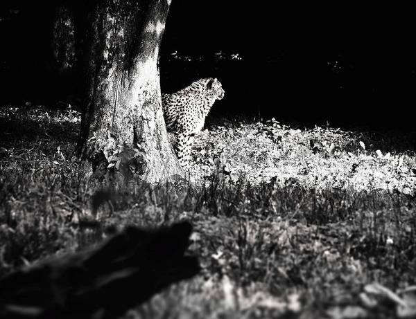 Photograph - The Cheetah by Jaroslav Buna