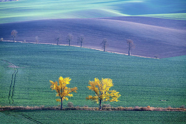 Photograph - The Chestnut Way, Moravia 14 by Dubi Roman