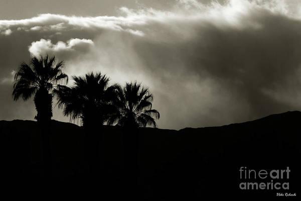Photograph - The Chosen Palms by Blake Richards