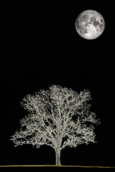 Photograph - The Christmas Moon by JC Findley