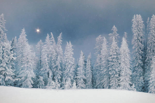 Wall Art - Mixed Media - The Christmas Star by Lori Deiter