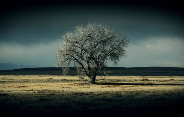 Wall Art - Photograph - The Cold by Brian Gustafson