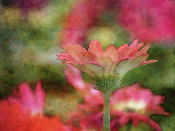 Photograph - The Color Underneath 6383 Idp_2 by Steven Ward