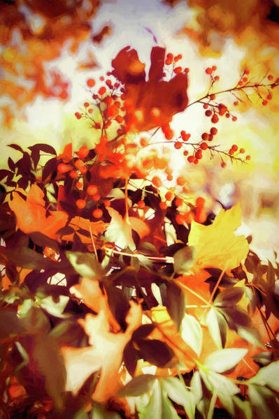Wall Art - Photograph - The Colors Of Autumn by Dan Carmichael