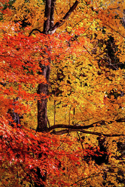 Photograph - The Colors Of Fall by Don Johnson