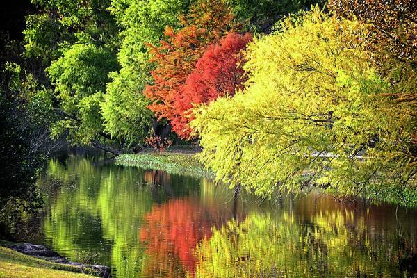 Photograph - The Colors Of Fall On Cibolo Creek by Lynn Bauer
