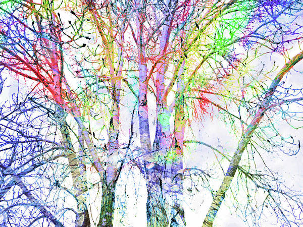 Distortions Digital Art - The Colour Inside The Branches by Tara Turner