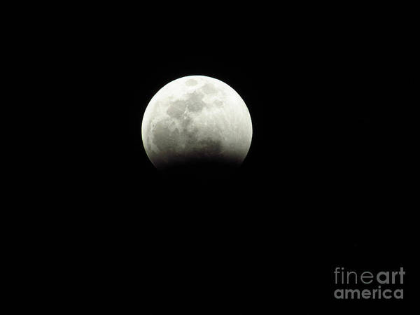 Photograph - The Coming Super Blood Wolf Moon Lunar Eclipse 2019 2 29407 by Robert Knight