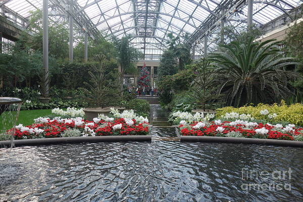 Photograph - The Conservatory At Christmastime   by Susan Carella