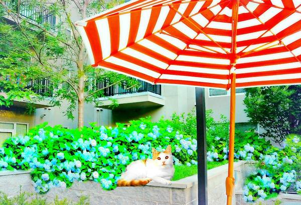 Wall Art - Photograph - The Courtyard Tabby by Diana Angstadt