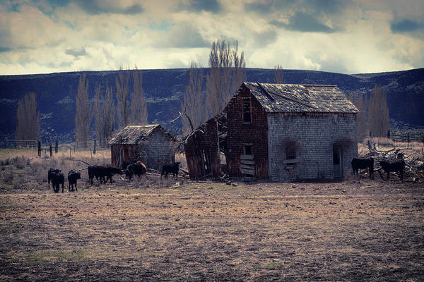 Wall Art - Photograph - The Cow Palace by Marnie Patchett