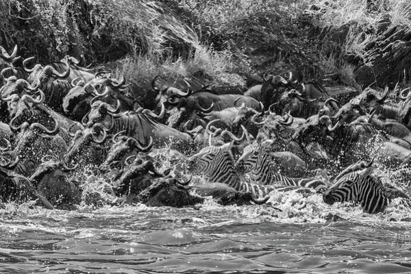 Photograph - The Crossing In Monochrome by Mark Hunter