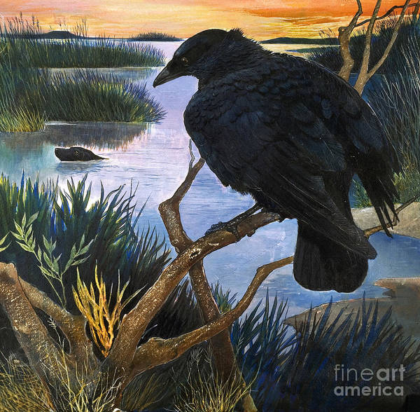 Wall Art - Painting - The Crow, Illustration From The Black Shadow by Gw Backhouse