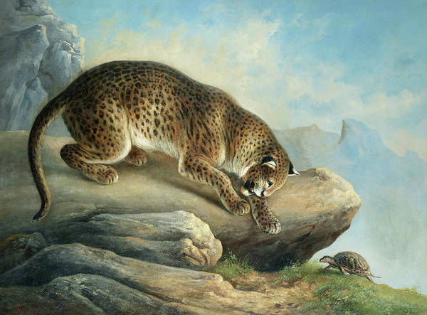 Wall Art - Painting - The Curious Encounter, A Leopard And A Tortoise by August Schleich