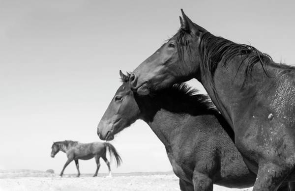 Wall Art - Photograph - The Desolate Desert. by Paul Martin