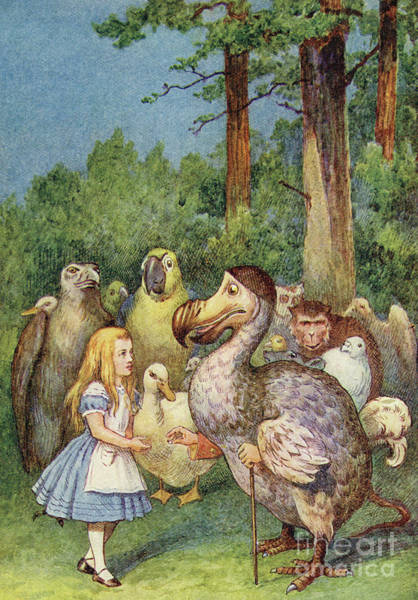 Alice Drawing - The Dodo Presents Alice With A Thimble by John Tenniel