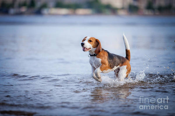 Friendly Wall Art - Photograph - The Dog In The Water, Swim, Splash by Dezy