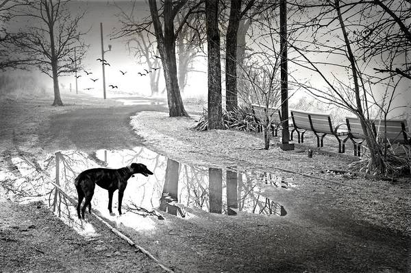 Wall Art - Photograph - The Dog Park by Diana Angstadt
