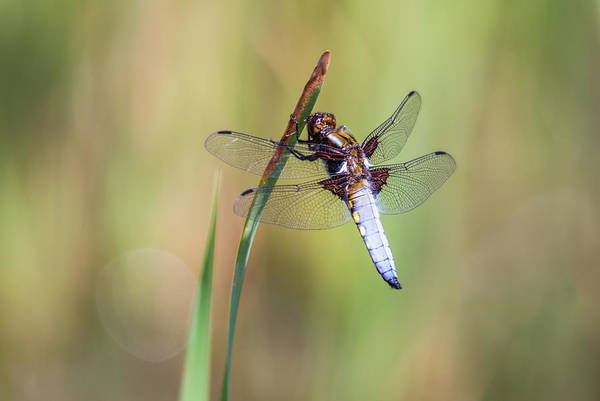 Wall Art - Photograph - The Dragonfly by Stephen Jenkins