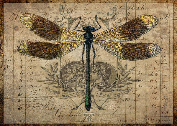 Digital Art - The Dragonfly by Terry Kirkland Cook