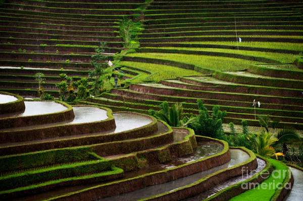 Wall Art - Photograph - The Dramatic And Graphic Rice Terraces by Edmund Lowe Photography