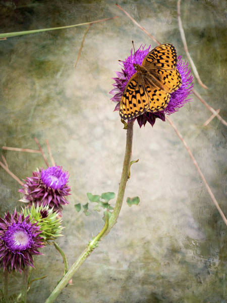 Photograph - The Dream Of A Butterfly by Mary Lee Dereske