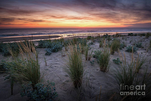 Photograph - The Dunes In The Sunset Light by Hannes Cmarits