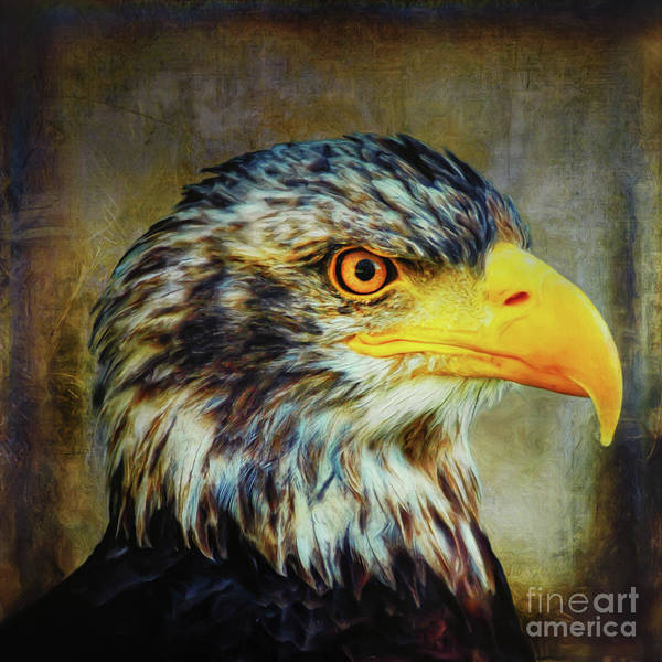 Digital Art - The Eagle by Angela Doelling AD DESIGN Photo and PhotoArt