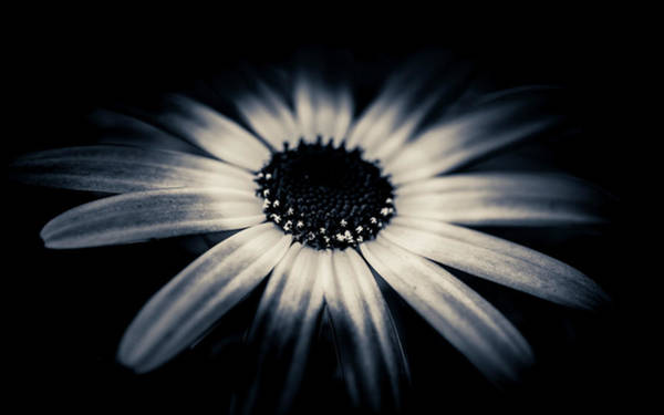 Photograph - The Early Bloomer by Alan Campbell