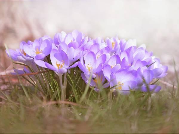 Photograph - The Earth Blooms 2 by Jaroslav Buna