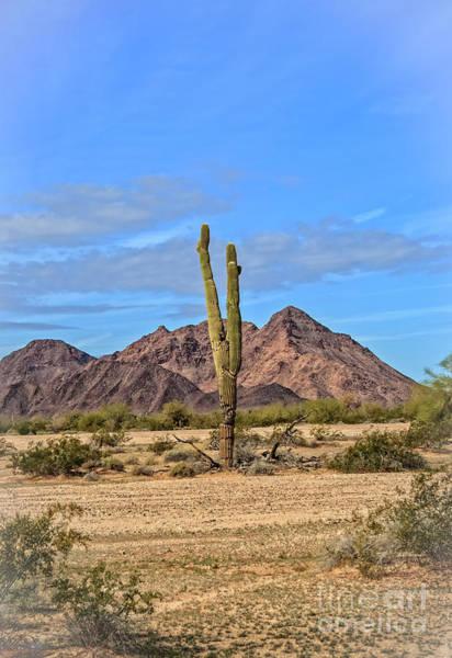 Wall Art - Photograph - The Edge Of Desert by Robert Bales
