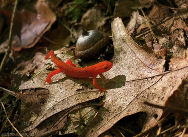 Up Close Photograph - The Efts Progress by Jerry LoFaro