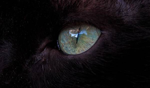 Photograph - The Eye Of A Black Cat by Eye to Eye Xperience