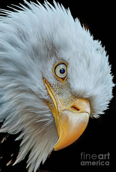 Photograph - The Eye Of The Eagle by Brian Tarr