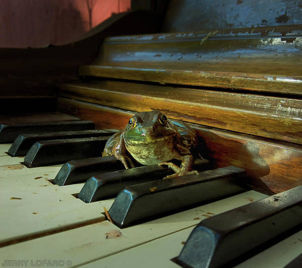 Frog Photograph - The F Key by Jerry LoFaro
