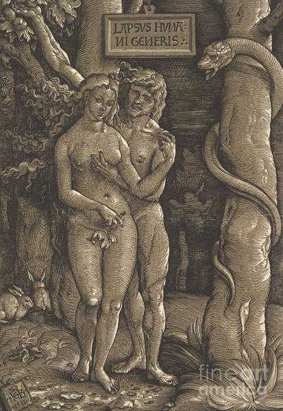 The Creation Of Adam Wall Art - Drawing - The Fall Of Mankind, 1511  by Hans Baldung Grien