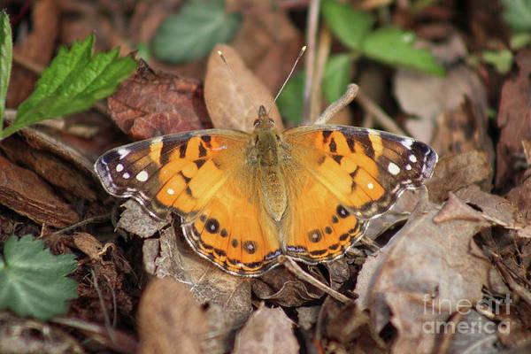 Photograph - The First Butterfly 2019 by Karen Adams