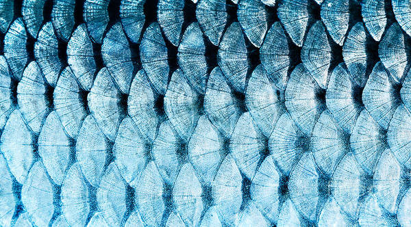 Zoology Wall Art - Photograph - The Fish Scale Close Up by Mycteria