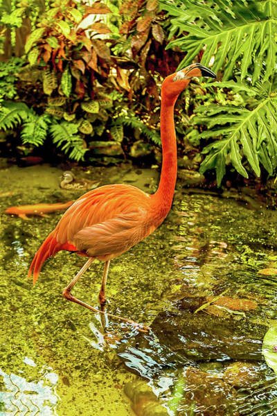 Photograph - The Flamingo by Kay Brewer
