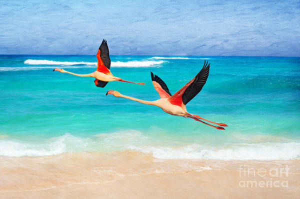 Wall Art - Photograph - The Flamingo Stretch by Laura D Young
